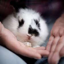 rabbit care rabbits rescue