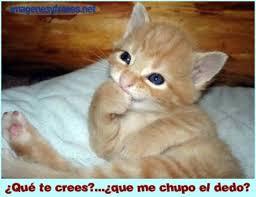 imagenes chistosas y tiernas imágenes para descargar gratis de gatitos con frases tiernas para