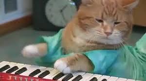 Keyboard Cat Meme - keyboard cat reincarnated from keyboardcat