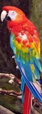 best 25 parrot ideas on pinterest parrots ara a and pretty birds