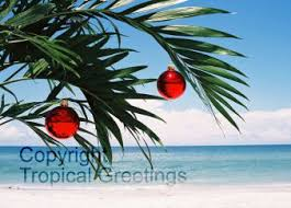 tropical christmas cards tropical photo greeting cards