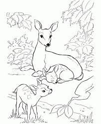 printable deer coloring pages az coloring pages pertaining to baby