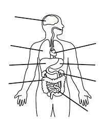 parts of the body coloring pages for preschool cmescobara human body parts