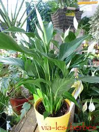 plante d駱olluante chambre plante depolluante pour chambre coucher une plantes vertes verte