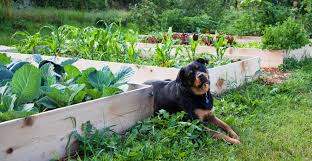 raised garden bed ideas for good gardening way creating a