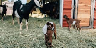 Get Your Goat Rentals by 50 Best Family Vacation Home Rentals Kid Friendly Vacation