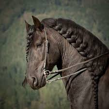 hairstyles for horses 85 best hairstyles for horses images on pinterest hair dos