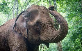 mondulkiri project elephant sanctuary u0026 jungle treks cambodia