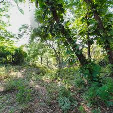 1 acre land for sale at musseau bourdon haiti