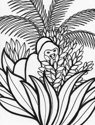 free coloring page of the rainforest jungle animal coloring pages ace coloring design zentangle
