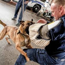 belgian shepherd kentucky the four legged officer u2014 kentucky law enforcement