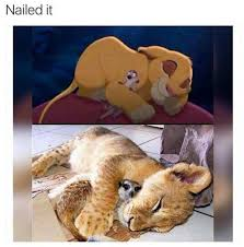 Mufasa Meme - nailed it internet meme lion meerkat mufasa real life