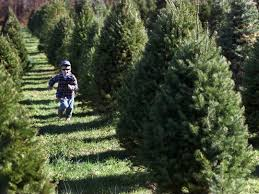 3 reasons u0026 22 places to buy real christmas trees in nj