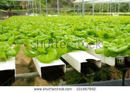 hydroponic vegetable garden design native garden design