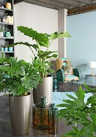 plants for living room articles with green living room couches tag green living room