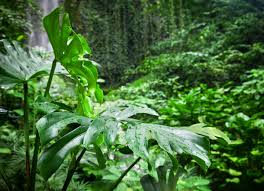 tropical rainforest native plants native plants 10 houseplants in their natural environment bob vila