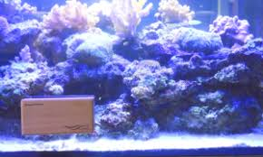 Saltwater Aquascaping Chihiros Magnet Cleaners For Aquarium Glass Review And Test By