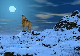 imagenes de fondo de pantalla lobos fondo escritorio paisaje lobo y luna