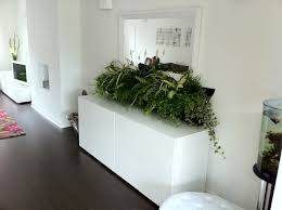 Home Interior Plants by Beauteous White Wall Home Design With Green House Plants Under