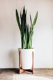 Home Plant Decor by Adding Green To Your Home Take Aim Blog Case Study Planters
