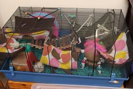 Hamster Cages Cheap Happy Healthy Hamsters Faq Hammy Happenings