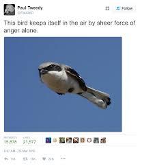 bird air sheer force anger