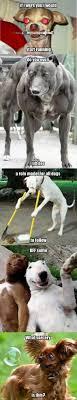 Hilarious Dog Memes - hilarious dog memes by drago2003521 meme center