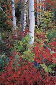 trees colorful fall foliage garden design