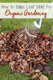 gardening tips 363 best gardening tips from one determined gardener images on