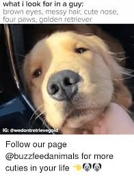 Golden Retriever Meme - 25 best memes about golden retriever golden retriever memes