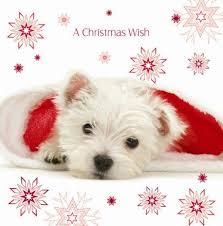 santa u0027s helper westie luxury christmas cards pack amazon co uk