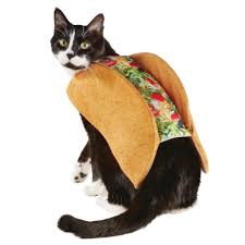 easy halloween costumes for pets miss kinsey u0027s