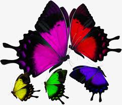 in colorful butterflies material object colorful butterfly