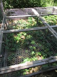 Strawberry Bed Squirrel Proofing Your Strawberry Bed U2022 Urban Overalls