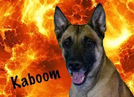 belgian sheepdog breeders michigan michael burkey dog behaviorist professional dog trainer dog