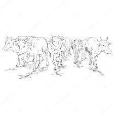 sketch cow herd u2014 stock vector nikiteev 57054747