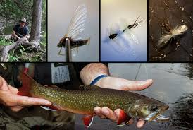 Wisconsin Trout Streams Map by Upper Peninsula Wifly A Wisconsin Flyfishing Blog