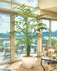 8 u0027 double kentia artificial palm tree at officescapesdirect