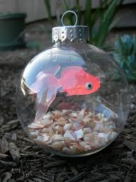 264 best goldfish my obsession images on aquarium