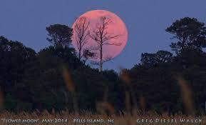 may full moon 2017 when to see the u0027flower moon u0027 in bloom