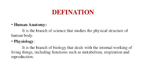Anatomy And Physiology Introduction To The Human Body Introduction To Human Anatomy And Physiology