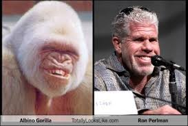 Soa Meme - clay morrow from sons of anarchy totally looks like an albino