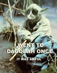 Star Wars Cat Meme - grumpy cat internet meme invades star wars socialeyezer
