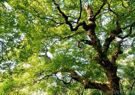 how do i choose the best backyard trees with picture