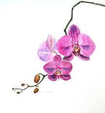 best 25 watercolor orchid tattoo ideas on pinterest flower