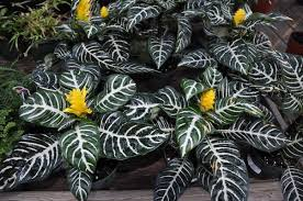 low light houseplants plants that don t require much light don t be afraid of the dark 27east