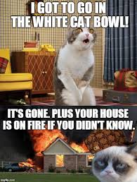White Cat Meme - gotta go cat meme imgflip