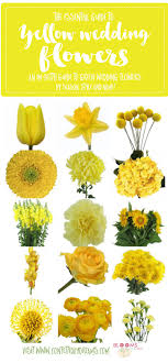 wedding flowers guide names and types of yellow wedding flowers with pics flower tips