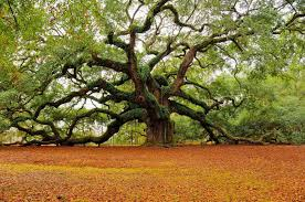 celtic month of the oak magick millenial