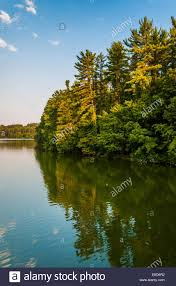 trees on the shore of lake williams in york pennsylvania stock